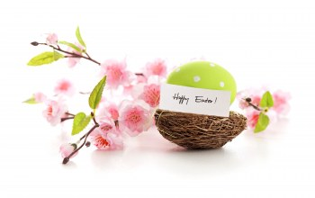 nest,Весна,blossom,eggs,pastel,happy,Easter,spring,delicate