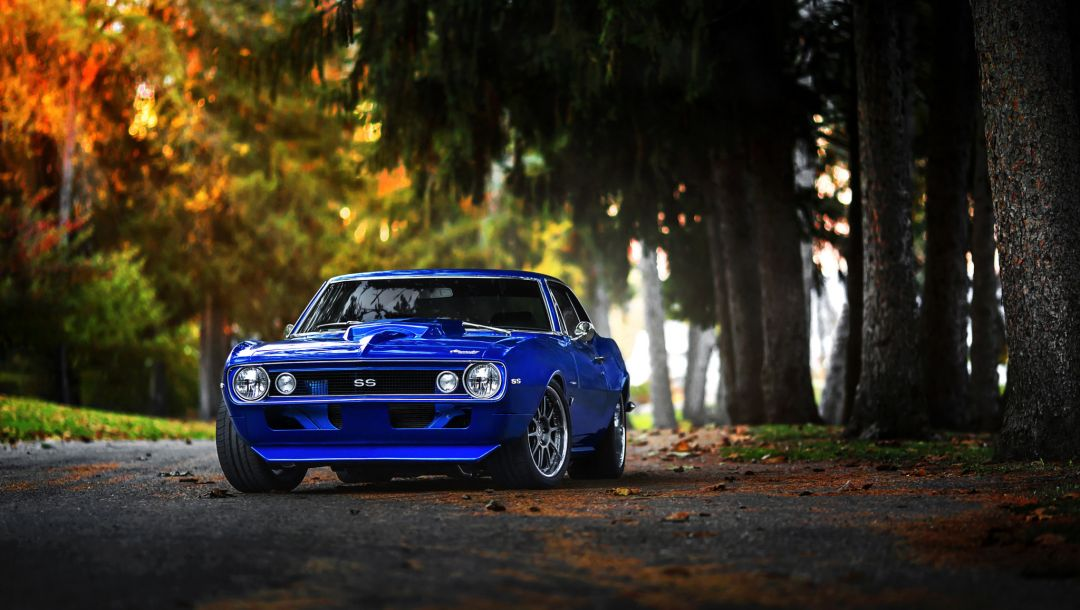 forest,Muscle,fall,blue,Color,1969,chevrolet,car,camaro