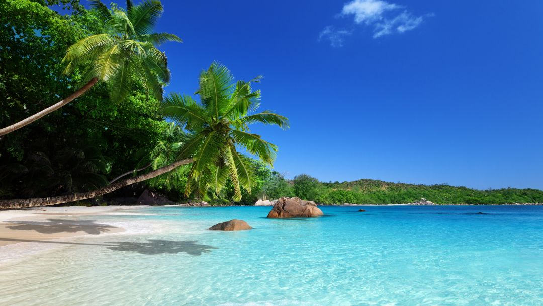 beach,summer,blue,paradise,palm,tropical,coast,sand,ocean,sky,emerald,sunshine