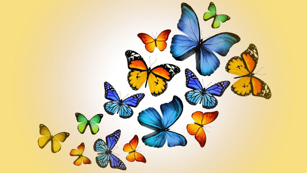 colorful,yellow,Design by marika,butterflies