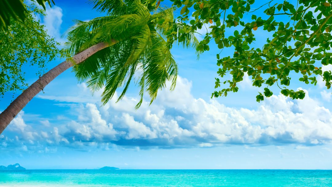 shore,landscape,Beautiful tropical ,palm tree,sky,beach,clouds,weeping