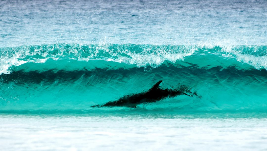 le grand np,shore,wave turquoise color,wa ,water,dolphin,cape,Surfing