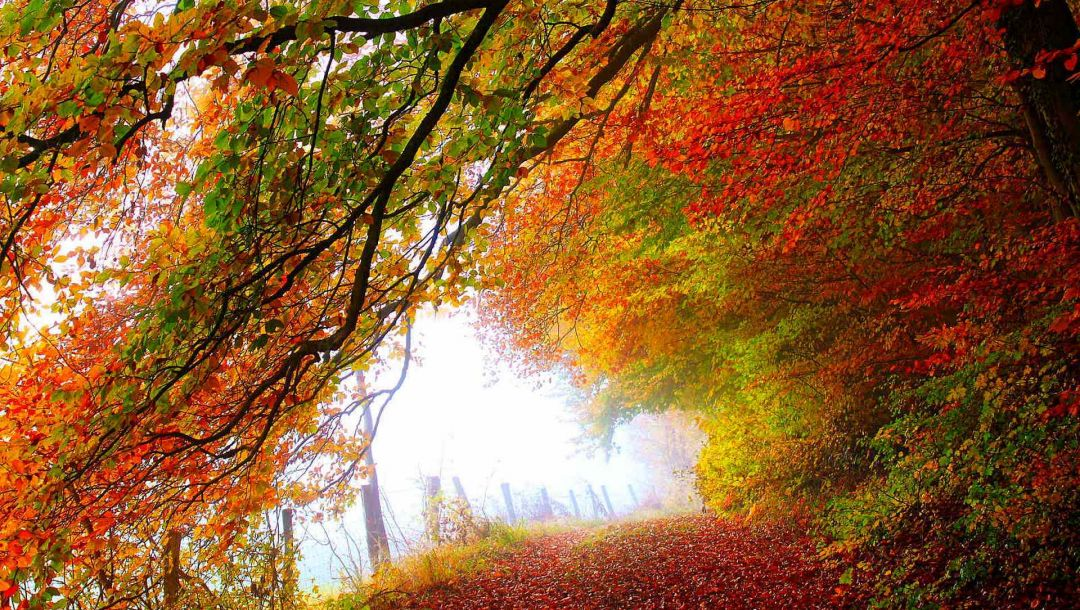 fall,colorful,walk,forest,Road,path,autumn,colors,trees,leaves,park