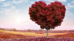 Valentines day,romance,sky,roses,clouds,field,tree,heart