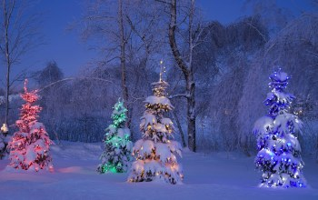 snow,light,trees,Канада,tree,winter,canada