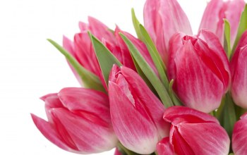 tulips,bright,яркие,beauty,Bouquet,цветы