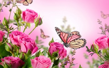 butterflies,цветы,blossom,roses,beautiful