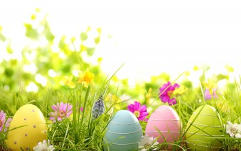 spring,eggs,grass,daisy,цветы,Easter,яйца,Camomile,Весна