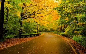 forest,fall,leaves,trees,colors,colorful,walk,autumn,path,Road