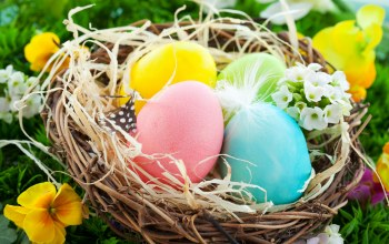nest,spring,eggs,basket,Easter,гнездо,яйца