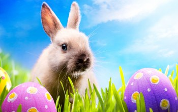 Easter,bunny,spring,meadow,grass,eggs,blue sky,sunshine,Rabbit,кролик