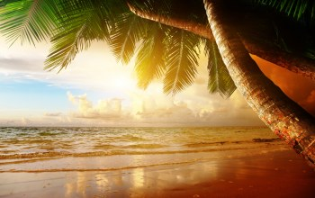 тропики,sand,ocean,paradise,beach,palm,coast,Sunset,summer,tropical