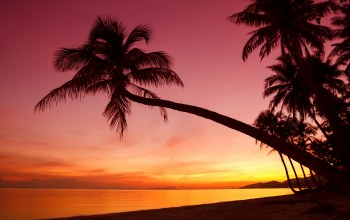Sunset,palm trees,tropical,shore,beautiful scene,weeping,beach,silhouette,ocean