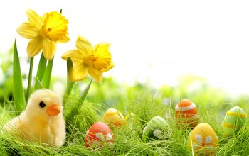 daffodils,colorful,grass,springer,chik,spring,eggs,Easter,Весна