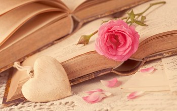 I love you,petals,rose,книги,heart,сердце,flower,books