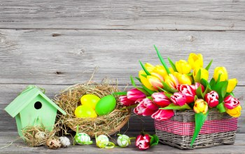 spring,Весна,colorful,Easter,eggs,цветы,tulips