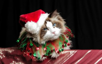 costume,cat,christmas,cute