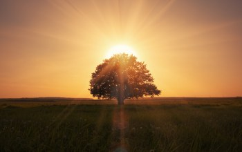 Пейзаж,beautiful scene,magical sunrise,landscape,grass field,lonely tree