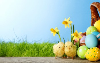 daffodils,grass,colorful,springer,eggs,Easter,Весна,spring