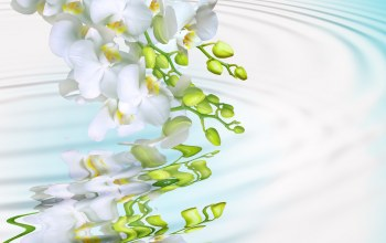 water,phalaenopsis,tenderness,beauty,White,splash,мacro,Orchid,petals,branch