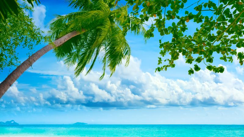 shore,,nature,landscape,Beautiful tropical ,sea,palm tree,sky,beach,clouds,weeping