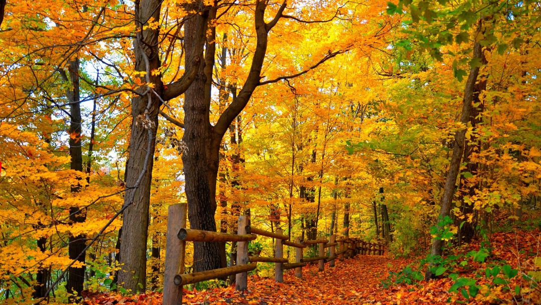 path,Road,trees,autumn,colors,colorful,fall,park,walk,leaves,forest