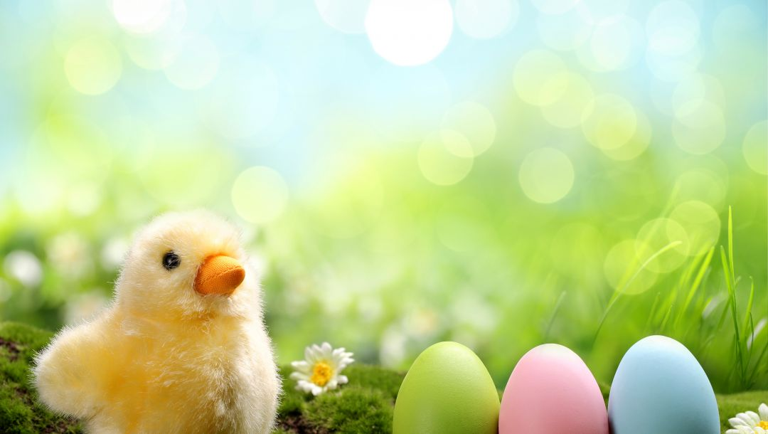 daisy,spring,chik,springer,Весна,Easter,eggs,grass,colorful