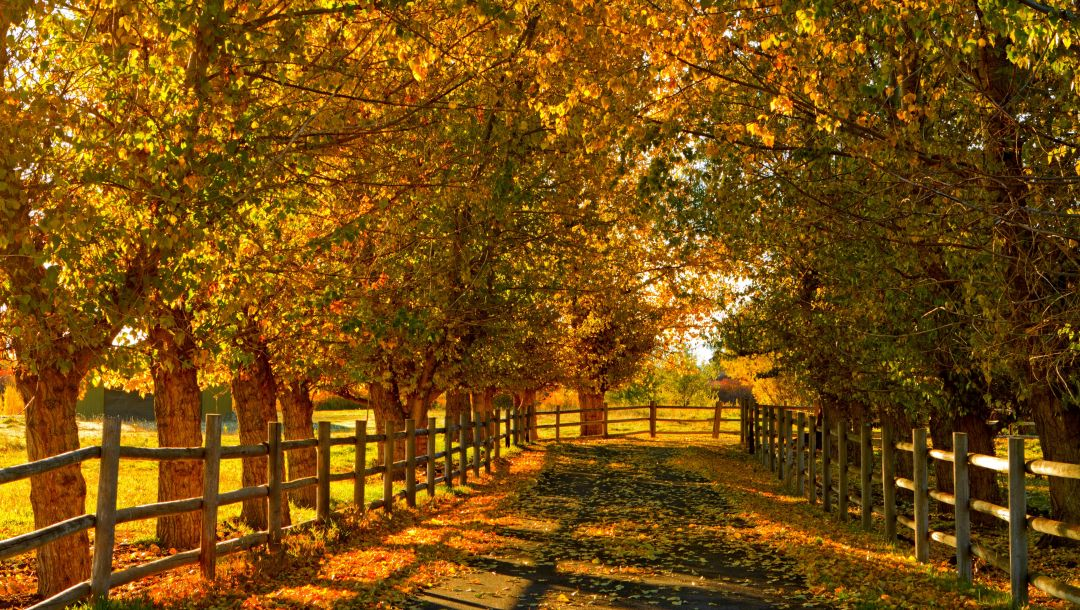 leaves,walk,colorful,field,trees,fall,forest,colors,path,Road,autumn