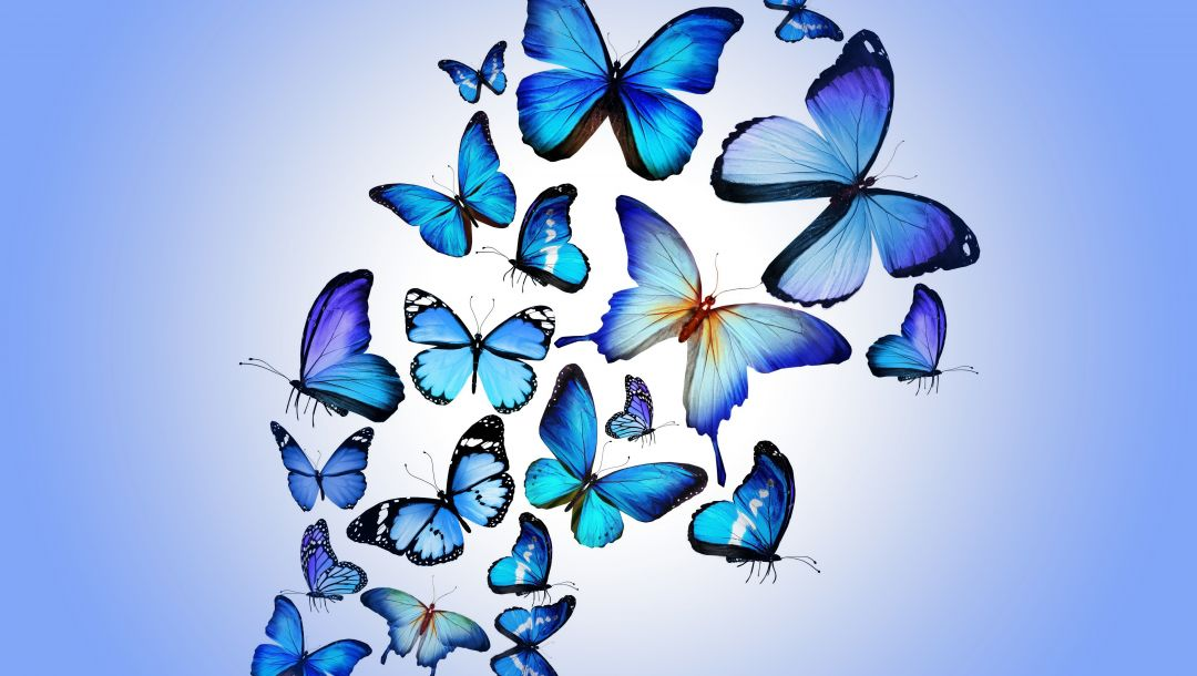 colorful,blue,butterflies,Design by marika