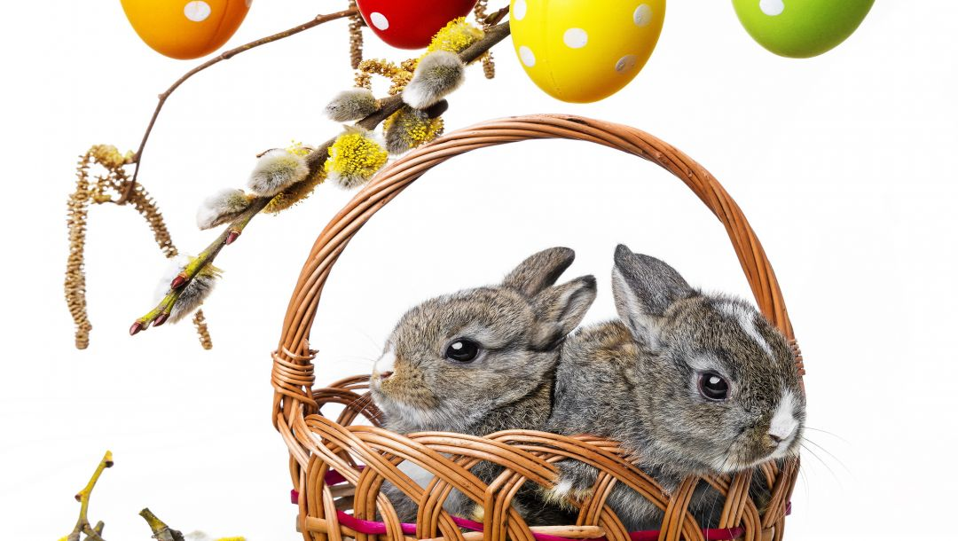 eggs,bunny,colorful,decoration,spring,Rabbit,Easter,willow twig