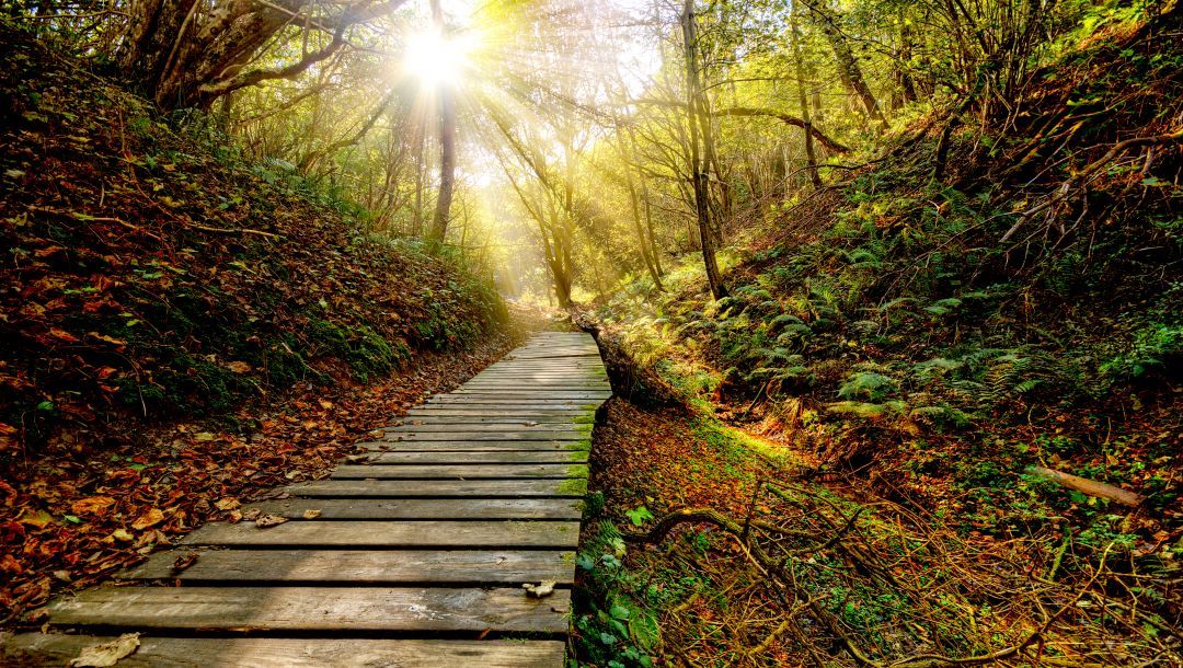 forest,Color,Sunset,grass,path,autumn,rays,clouds,view,leaf,sky