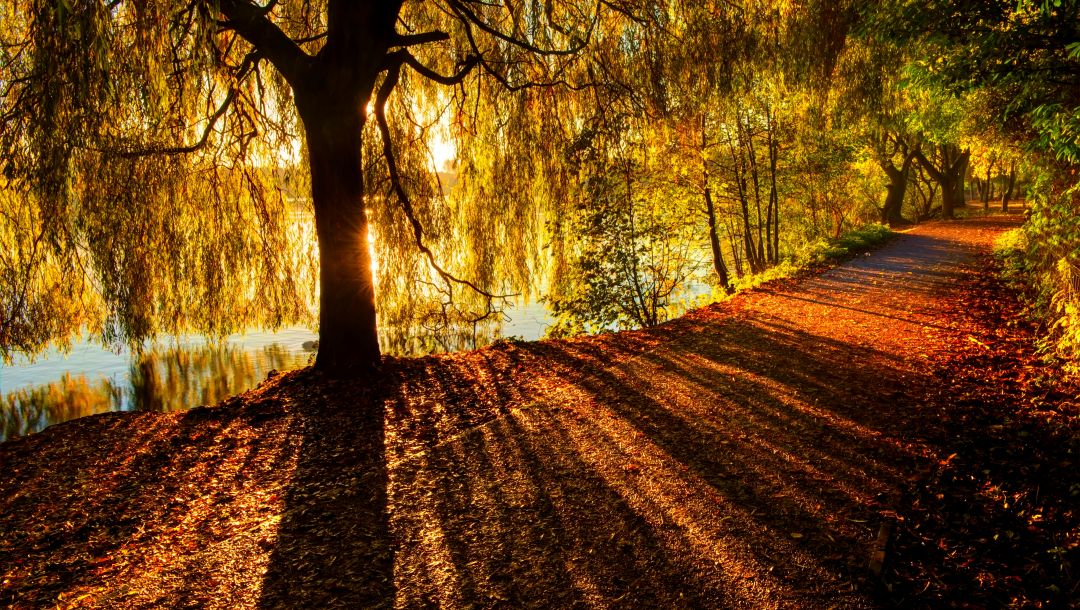 colors,trees,fall,Road,river,colorful,park,walk,path,leaves,forest,autumn