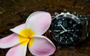 Watch,sinn,flower