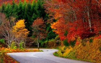 trees,leaves,path,autumn,colors,colorful,fall,Road,walk,forest