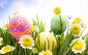 Весна,Easter,daisy,eggs,Camomile,sunshine,grass,meadow,spring