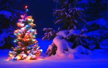 елка,tree,lights,ель,snow,winter,forest