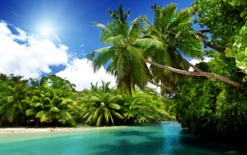beach,emerald,vacation,тропики,blue,palms,ocean,summer,tropical,paradise