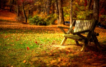 forest,colors,park,Road,leaves,grass,bench,walk,trees,autumn