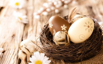 Easter,Camomile,wood,eggs,яйца