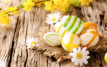 eggs,wood,Easter,яйца,Camomile