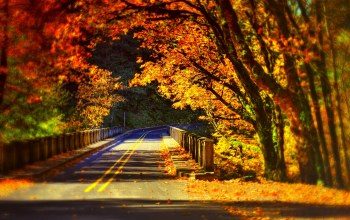 autumn,trees,walk,path,colors,forest,bridge,leaves,Road,colorful,fall,park