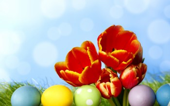 цветы,tulips,spring,eggs,Весна,Easter,colorful