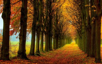 colors,walk,field,path,trees,forest,leaves,autumn,colorful,Road,fall