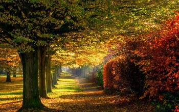 park,forest,trees,path,Road,colors,walk,colorful,fall,leaves,autumn