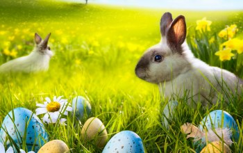 sunshine,Camomile,grass,Rabbit,spring,Easter,meadow,bunny,eggs