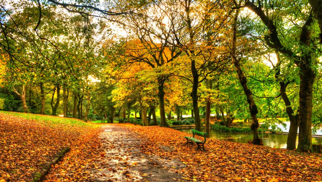 autumn,sky,bench,view,leaves,forest,trees,walk,alley,fall,water,river,park