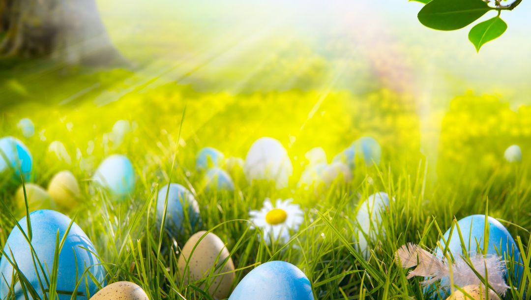 spring,Easter,eggs,meadow,grass,forest,sunshine,Camomile