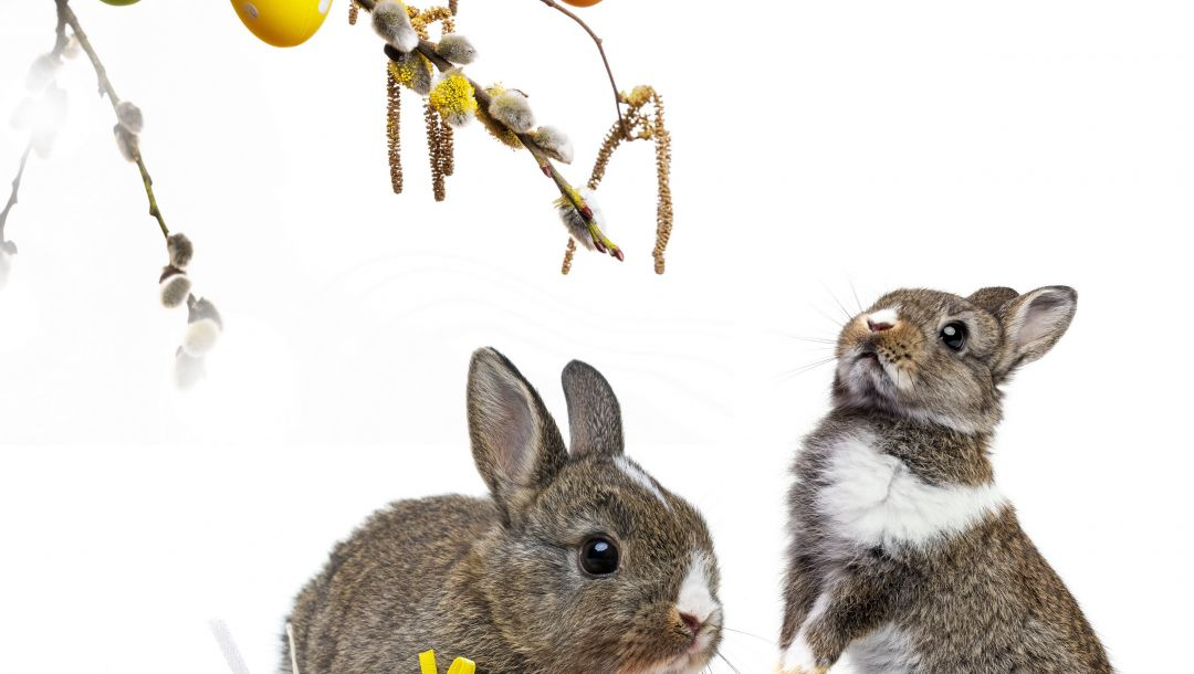 Easter,decoration,colorful,willow twig,Rabbit,eggs,spring,bunny