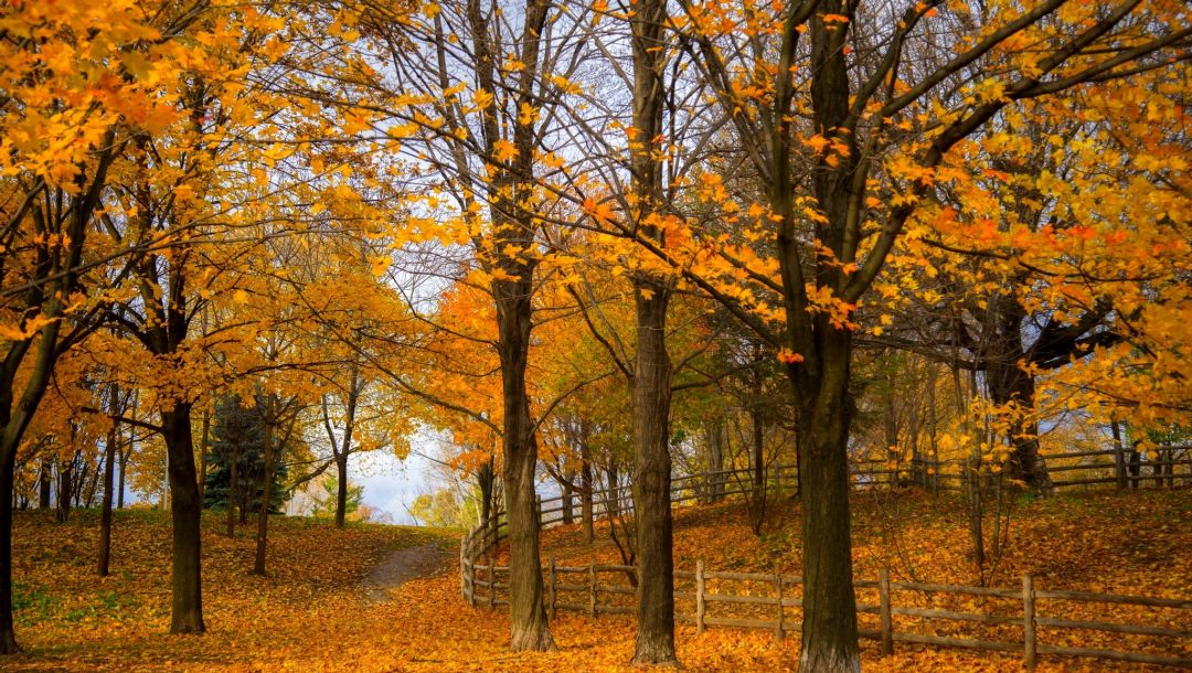 Road,fall,path,forest,park,trees,walk,colorful,colors,autumn,leaves
