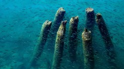 dock,fish,water,remains,blue,wood,ohrid